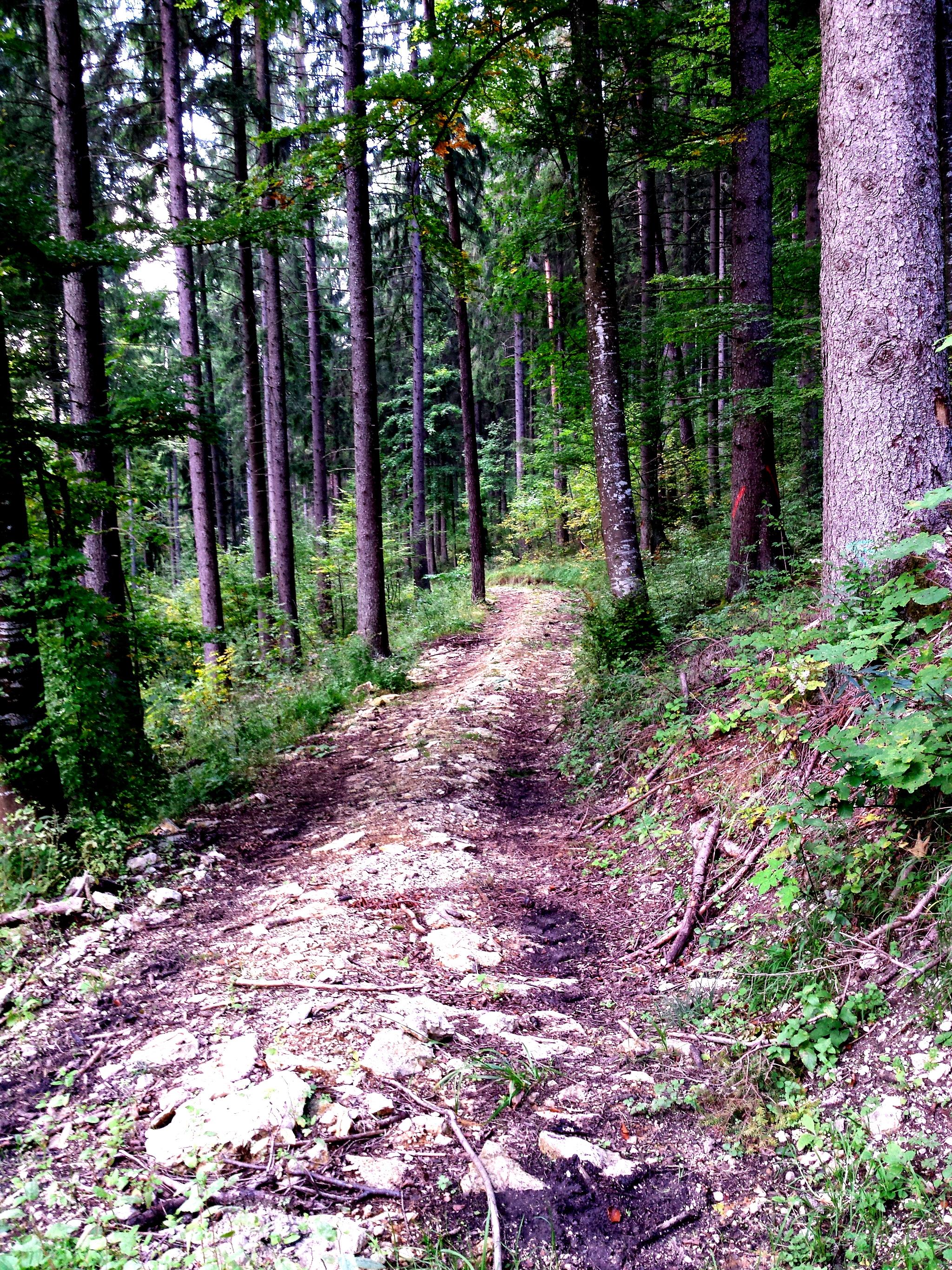 Ein ertragreicher Waldspaziergang – Pilze sammeln