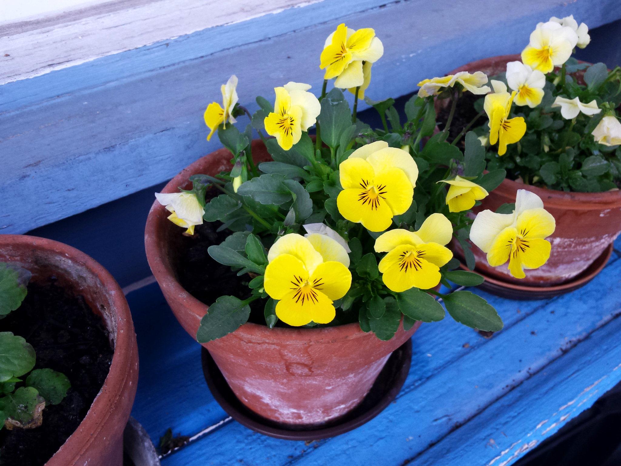 Arbeiten im Frühling – der Selbstversorger-Garten im März